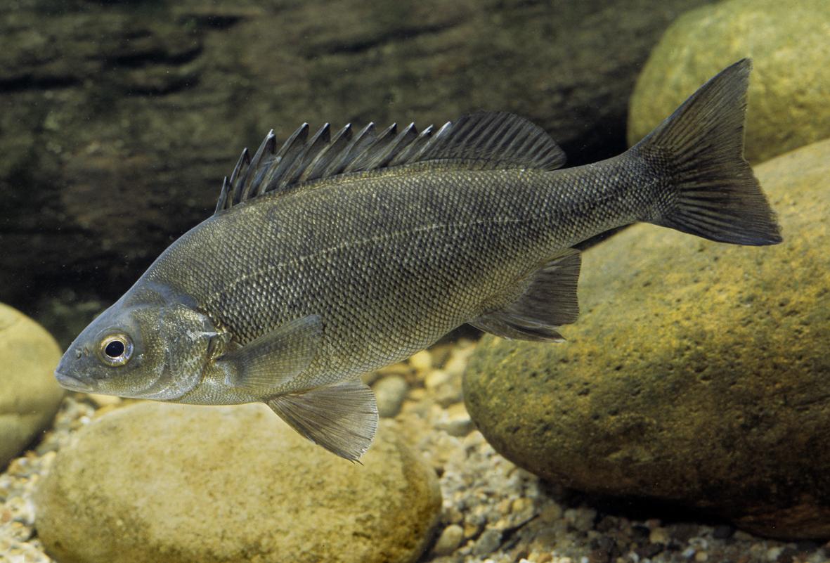 Aquaponics And Aquarium Fish My Cms